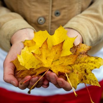 girl-hands-leaves-autumn